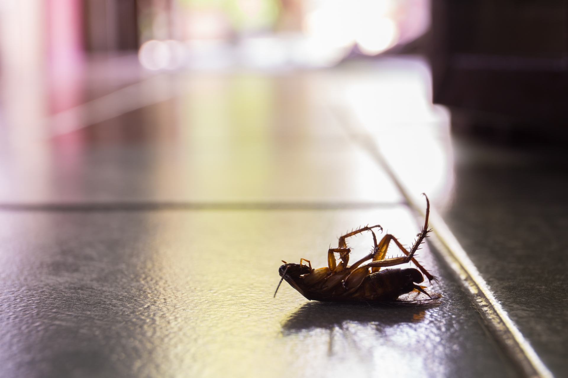 Cockroach Control, Pest Control in South Woodford, E18. Call Now 020 8166 9746