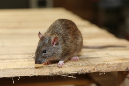 Pest Control South Woodford. Call Now 020 8166 9746