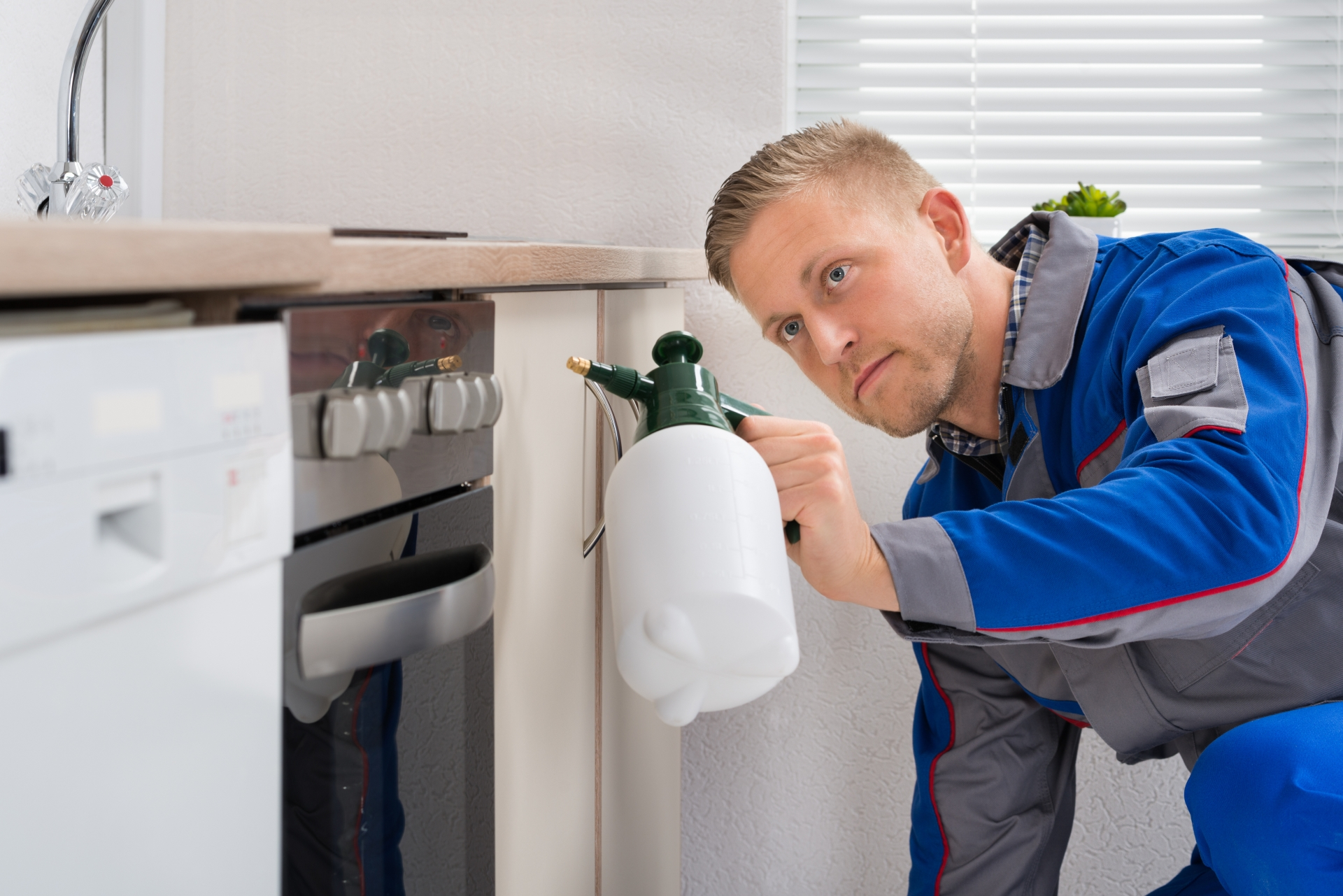Pest Inspection, Pest Control in South Woodford, E18. Call Now 020 8166 9746